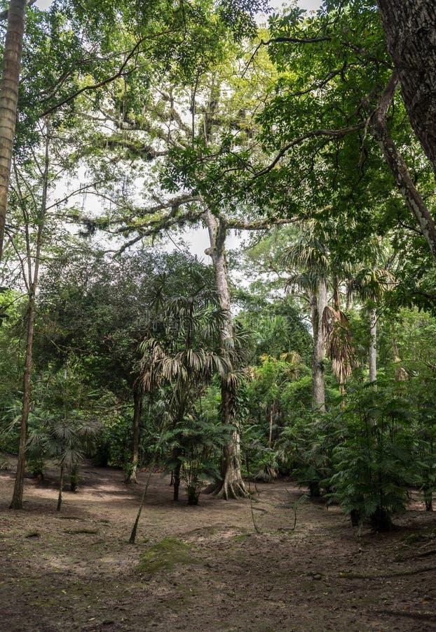 Parc de Tikal Objet guidé au Guatemala avec les temples maya et les ruines de cérémonial Tikal est une citadelle maya antique sou photographie stock libre de droits