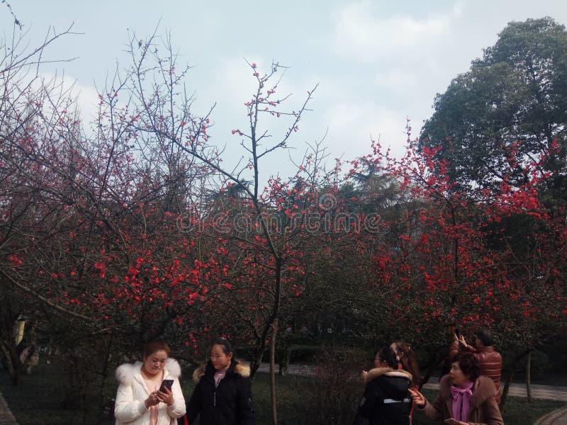 Parc de Tonghua photos libres de droits