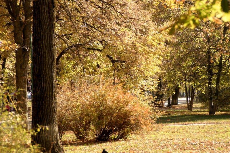 Parc de ville pendant le jour chaud d'automne photo stock