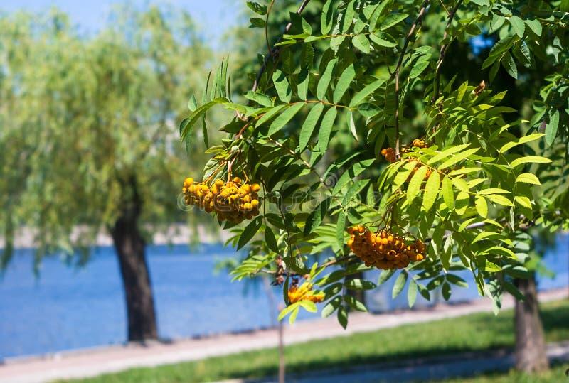 parc de ville de ressort - fleur et arbres de floraison, herbe vert clair photos libres de droits