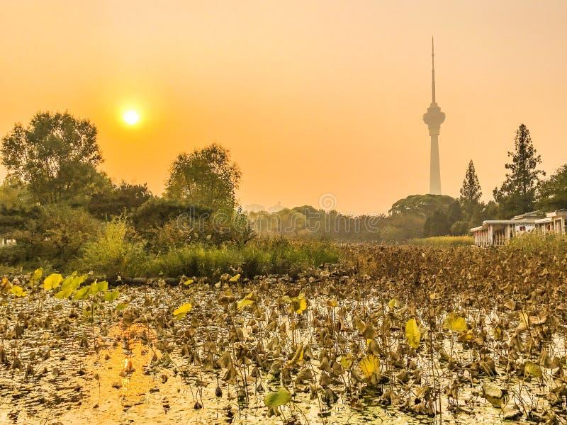 Parc de Yuyuantan photographie stock libre de droits