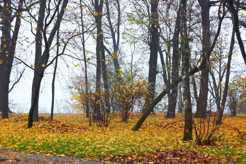 Parc en automne par temps brumeux photographie stock