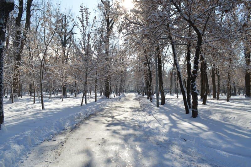 Parc en hiver, nature en hiver, hiver, parc, lac en hiver, neige, lac dans la neige, secteur de parc photographie stock