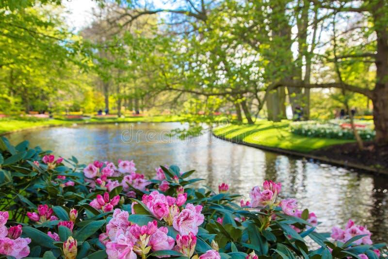 Parc ensoleillé de floraison de ressort image stock