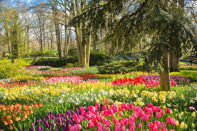 Parc ensoleillé de floraison de ressort Beau fond de ressort image libre de droits