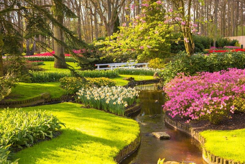 Parc ensoleillé de floraison de ressort Beau fond de ressort photos stock