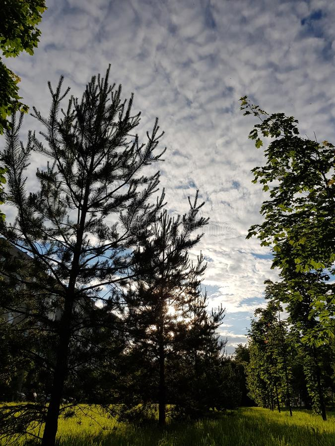 Parc et ciel ensoleillés de ville avec le sapin photographie stock libre de droits