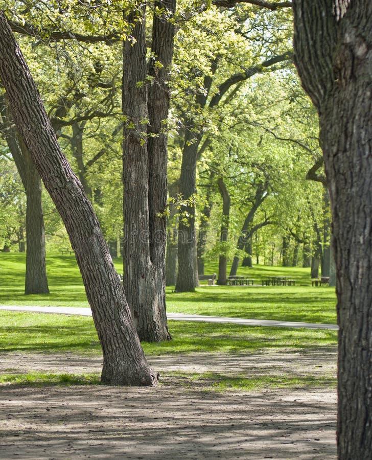 Parc extérieur avec de grands arbres et tables de pique-nique photographie stock