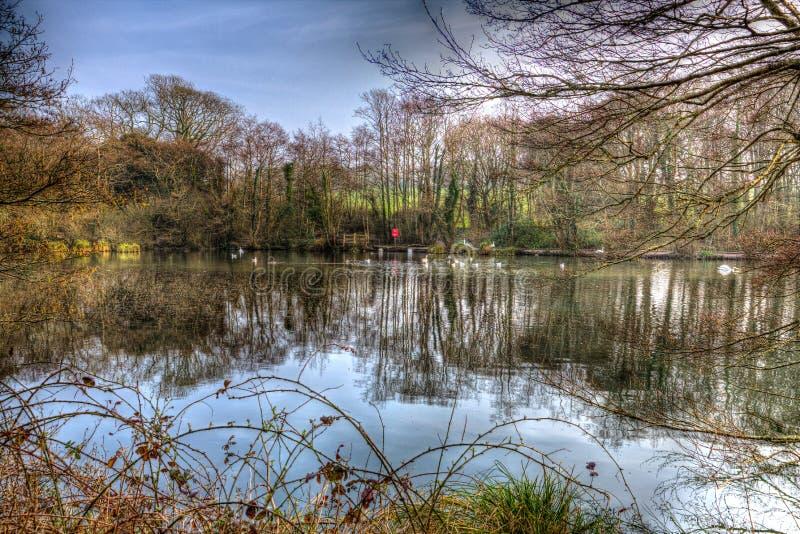Parc les Cornouailles Angleterre R-U de pays de Tehidy près de Camborne et de Redruth avec la région boisée et les lacs dans HDR photographie stock