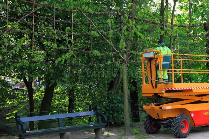 Parc maintenance personnel at work, outdoors stock images