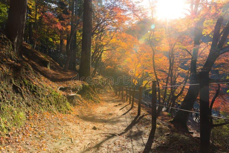 Parc Nagoya d'automne de forêt de Korankei photographie stock libre de droits