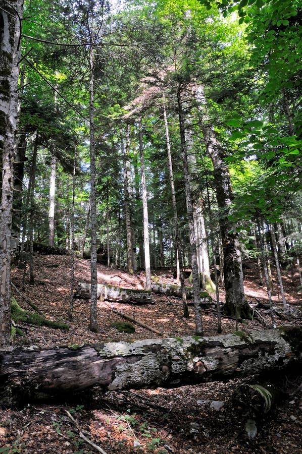 Parc national Biogradska Gora, Monténégro images stock