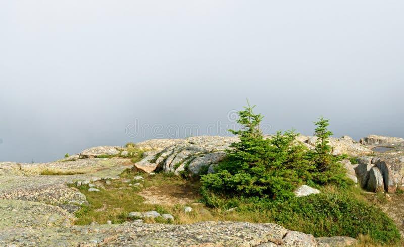 Parc national d'Acadia brouillard image stock
