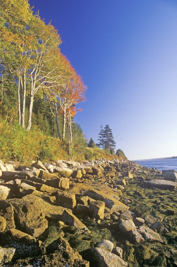 Parc national d'Acadia en automne, Maine photos libres de droits