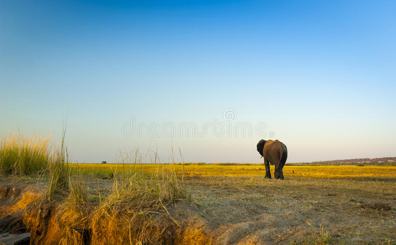 Parc national de Chobe photographie stock