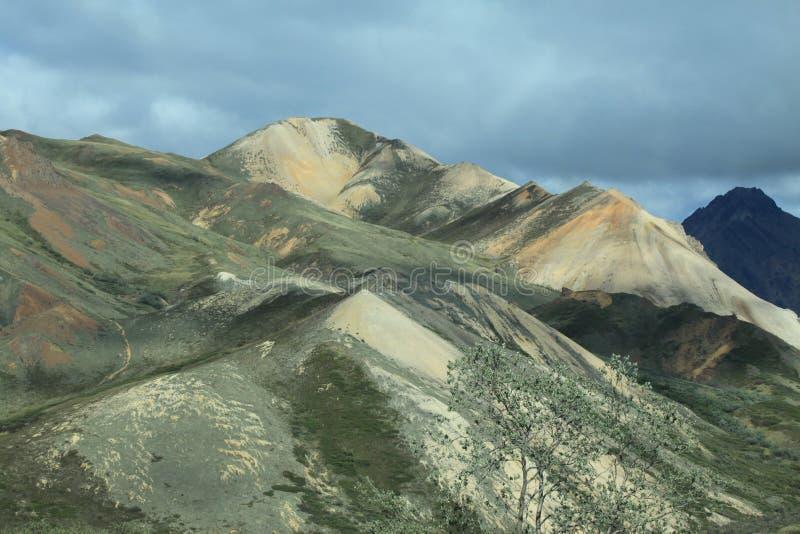Parc national de Denali image libre de droits