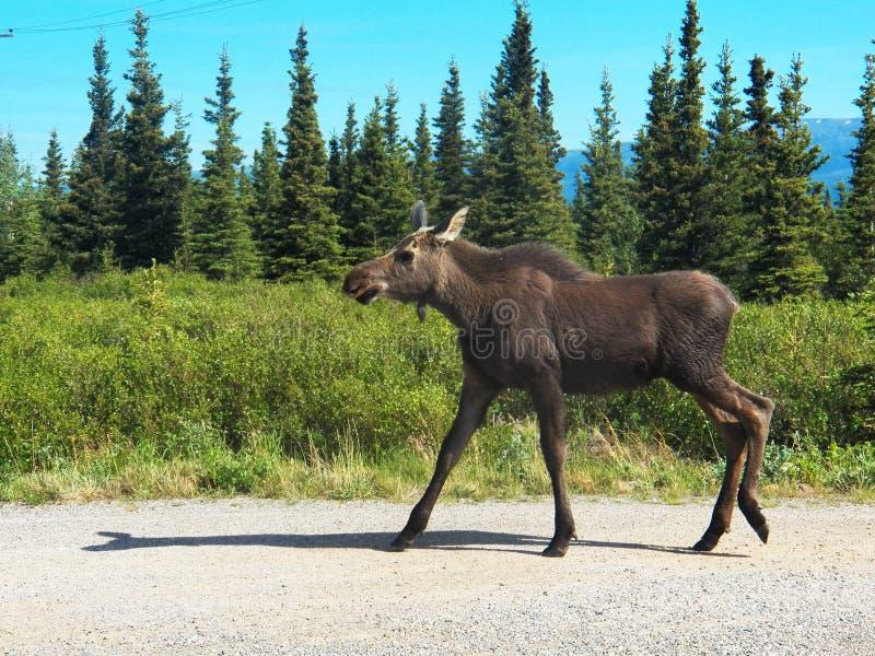 Parc national de Denali photo stock