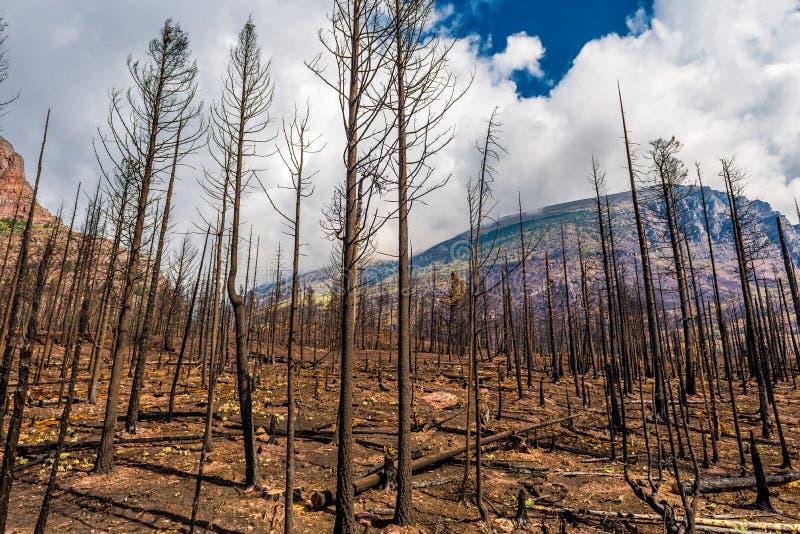 Parc 2015 national de glacier de Reynolds Creek Wildland Forest Fire de conséquence image stock
