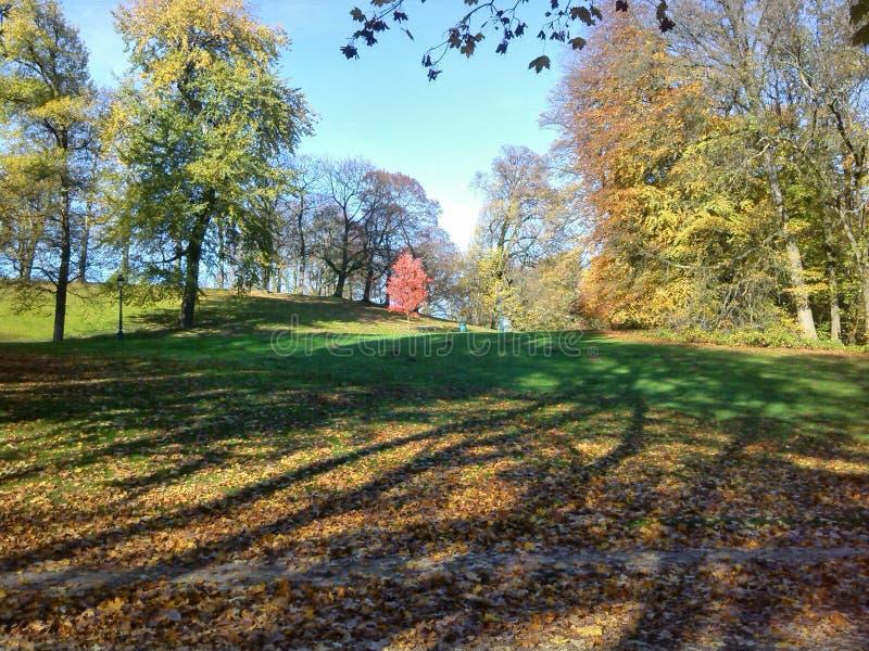 Parc national de Helecine en Belgique image libre de droits