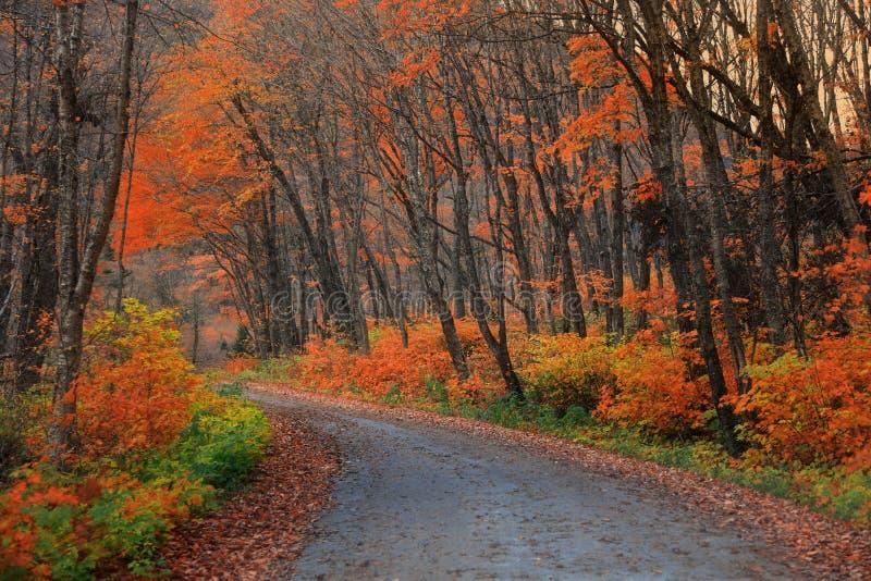 Parc national de Parc de la Jacques-cartier au Québec photo libre de droits