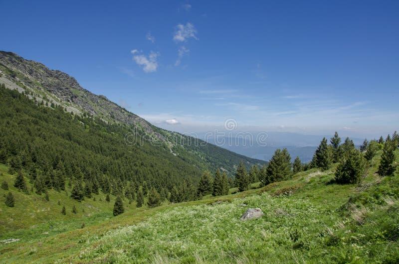 Parc national de Macédoine - de Pelister images stock