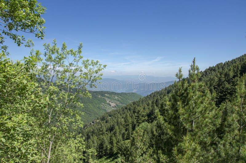 Parc national de Macédoine - de Pelister photographie stock libre de droits