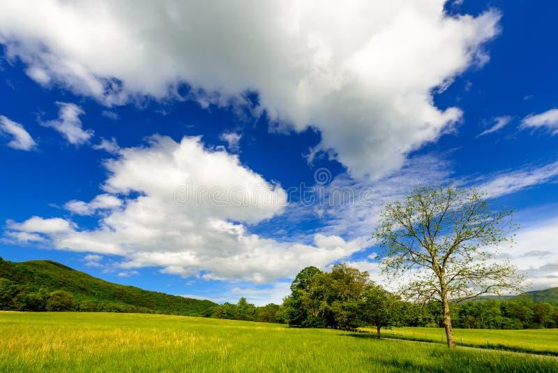 Parc national de montagne fumeuse de crique de Cades grand images libres de droits