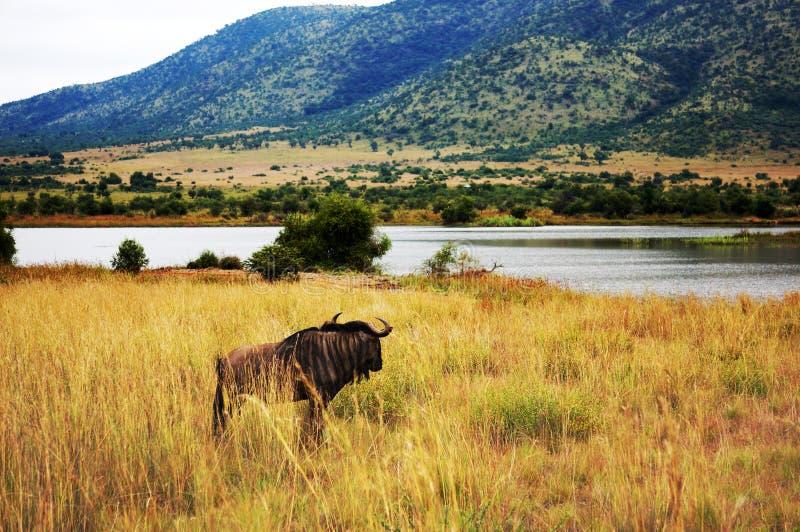 Parc national de Pilanesberg images libres de droits