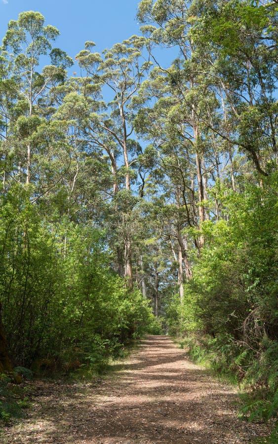Parc national de Porongurup, Australie occidentale photographie stock