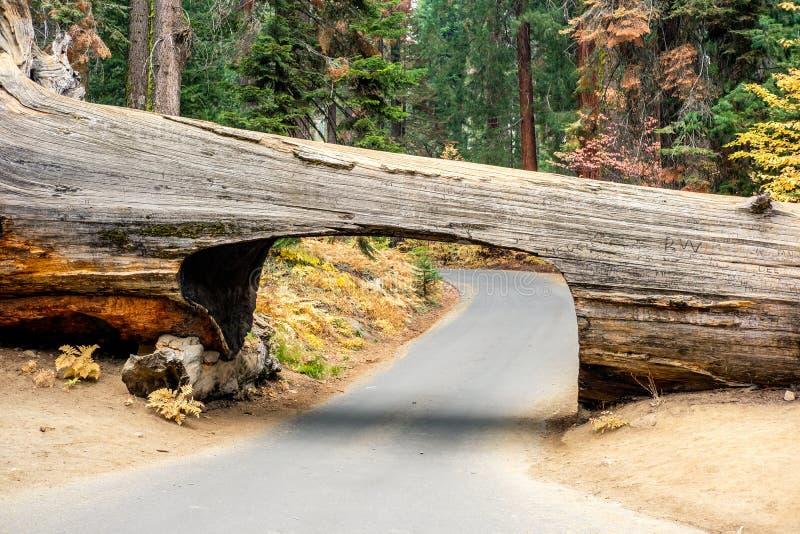 Parc national de séquoia d'identifiez-vous de tunnel photographie stock