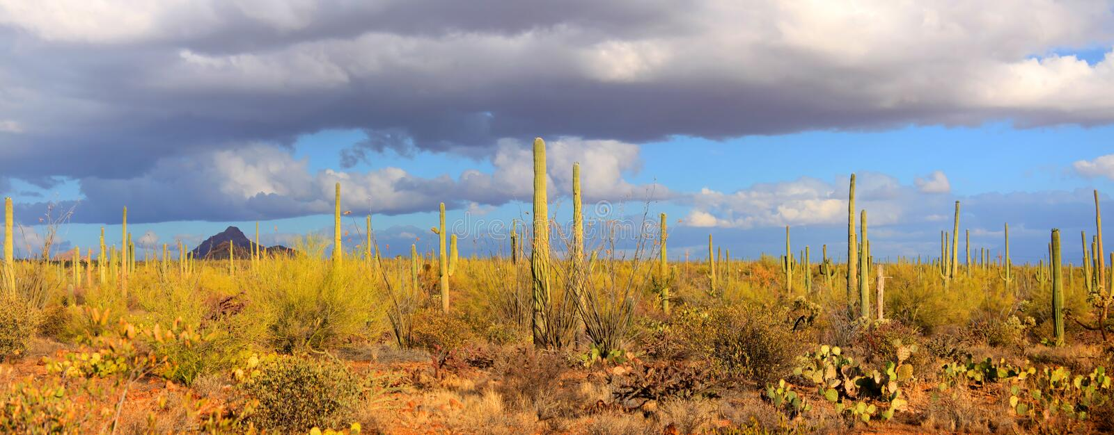 Parc national de Saguaro photo stock