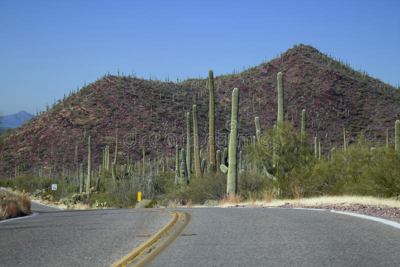 Parc national de Saguaro image stock