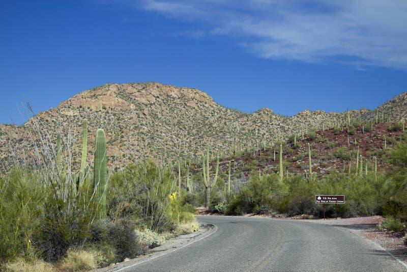 Parc national de Saguaro image libre de droits