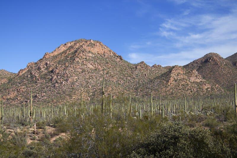 Parc national de Saguaro images libres de droits
