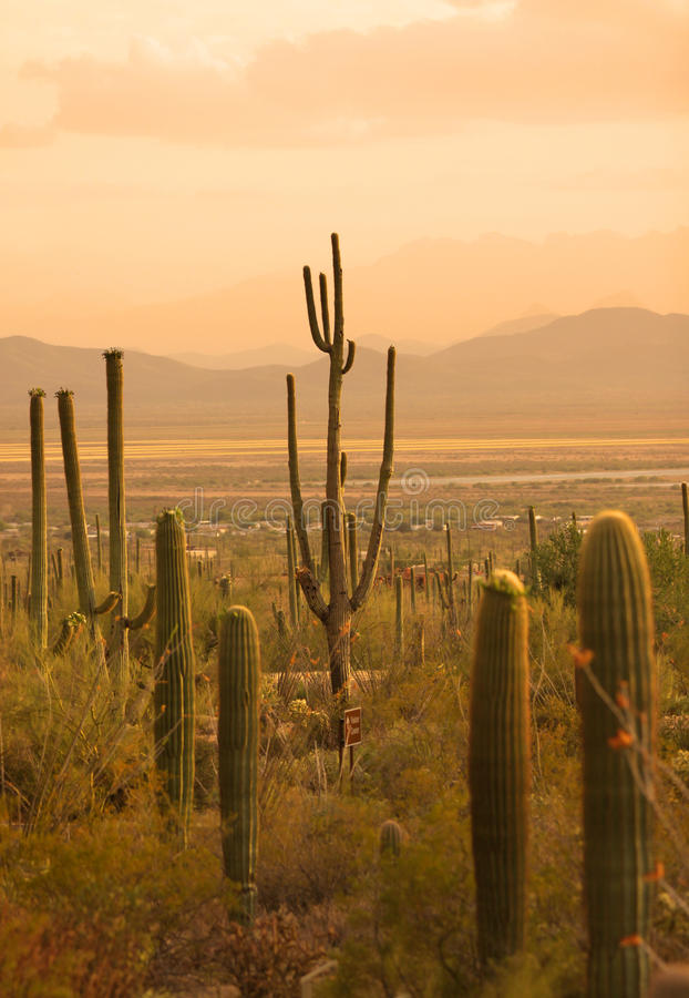 Parc national de Saguaro image stock