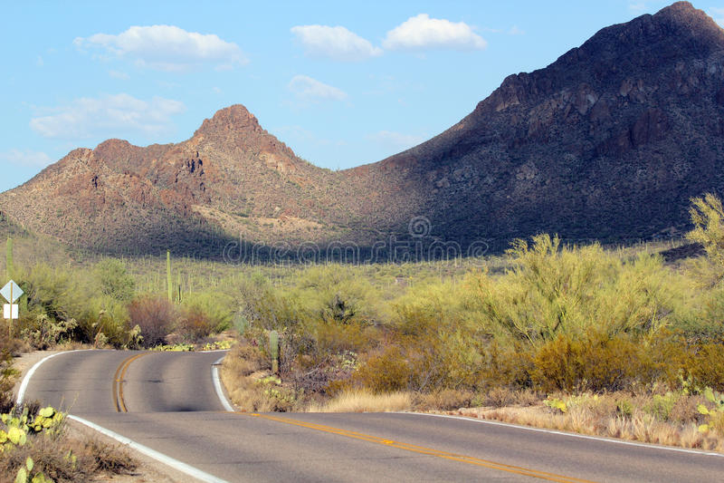 Parc national de Saguaro, Tucson Arizona image libre de droits