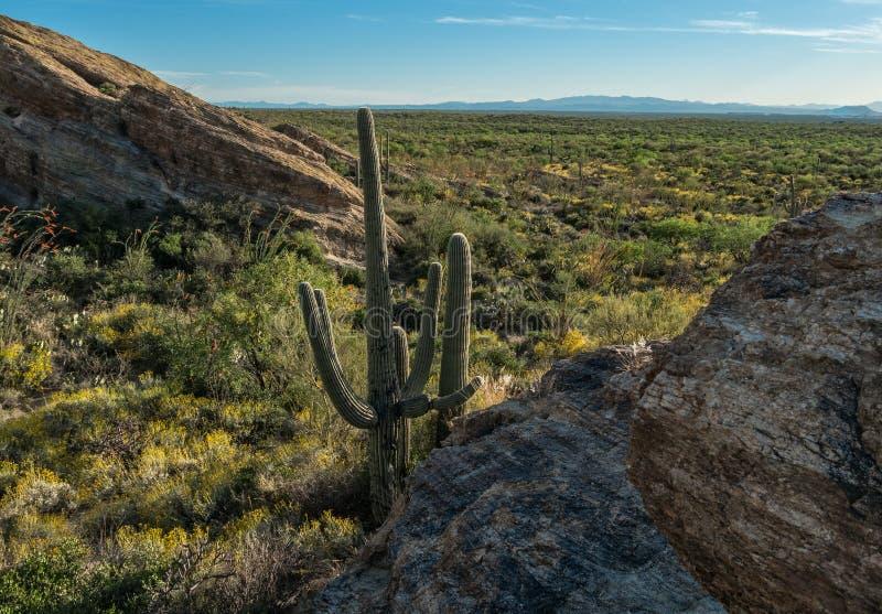 Parc national de Saguaro, Tucson, Arizona photographie stock libre de droits