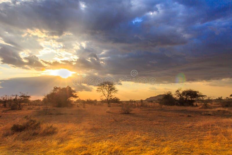 Parc national de Serengeti en Tanzanie du nord-ouest photographie stock libre de droits