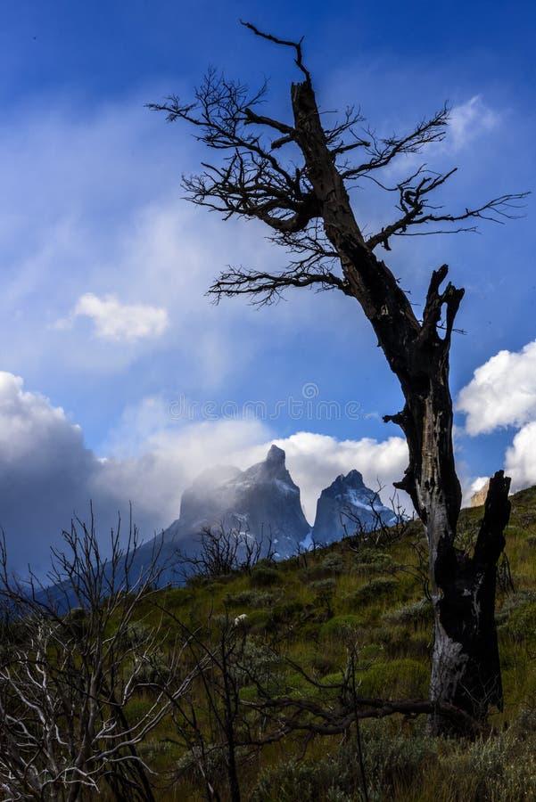 Parc national de Torres del Paine, Patagonia, Chili photos stock