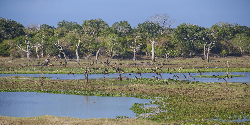 Parc national de Yala image libre de droits
