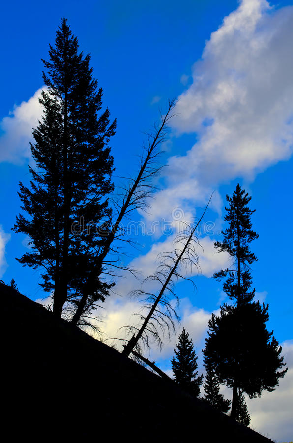 Parc national de Yellowstone de silhouette de pin images stock