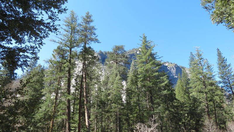 Parc national de Yosemite, la Californie photographie stock libre de droits