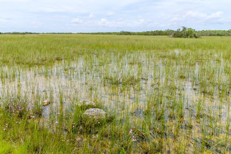Parc national des Everglades en Floride photographie stock libre de droits