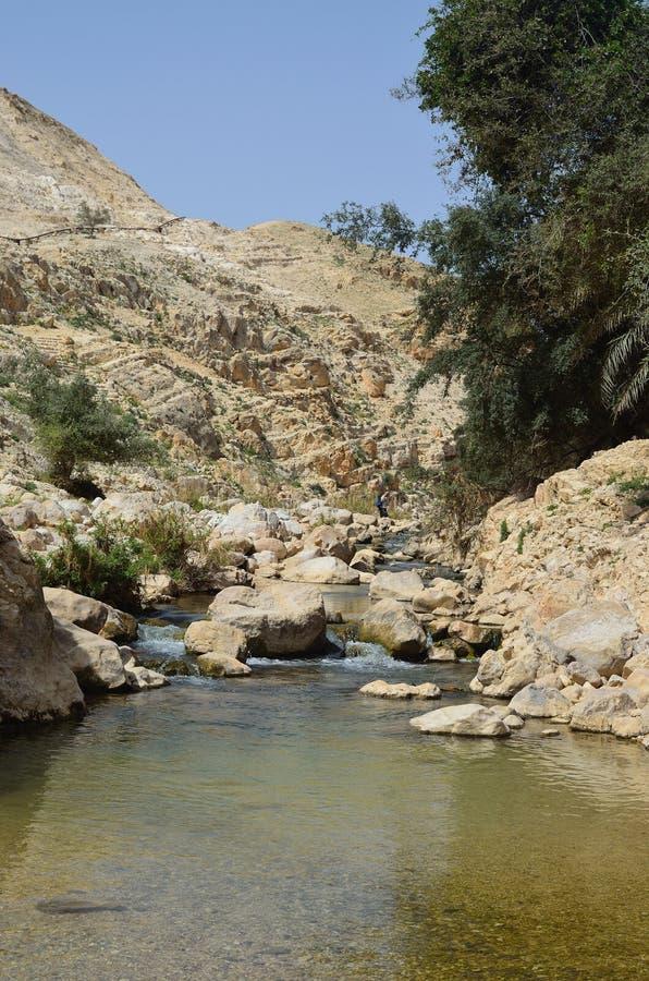 Parc national Israël de couillon d'Ein images libres de droits
