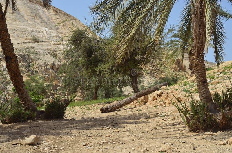 Parc national Israël de couillon d'Ein image libre de droits