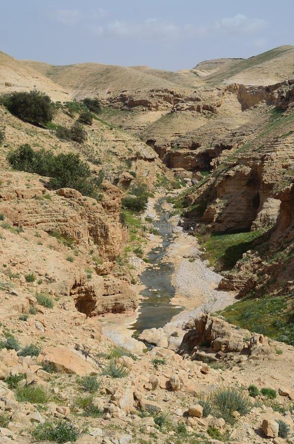 Parc national Israël de couillon d'Ein photographie stock