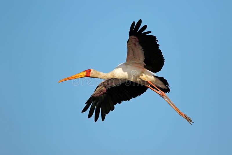 parc national Jaune-affiché de Kruger de cigogne en vol - photographie stock libre de droits