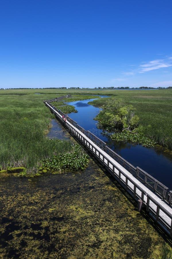 Parc national Marsh Boardwalk #2 de Pelee de point images libres de droits