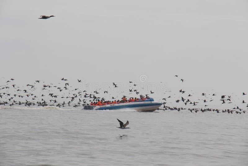Parc national Paracas peru images stock