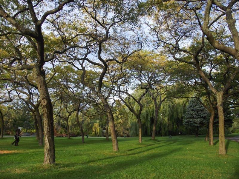 Parc naturel d'île de Toronto photo stock